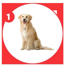 steps1.1-giftpet
