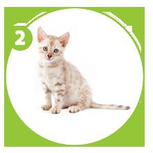 steps-giftpet-kitty