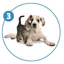 steps-giftpet-puppi-and-kitty