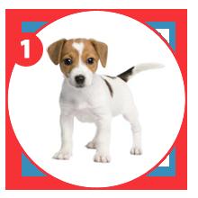 steps-giftpet-puppi